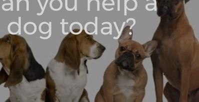 Help raise £3000 to 10,000 swings to help Rescue Remedies find homeless dogs new homes £3,000 = boarding for 1 dog for a year, or 12 dogs for 1 month